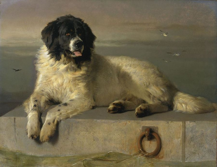 Coeur de chien - Boulgakov - Les Petites Analyses - Johan Creeten- Sharik