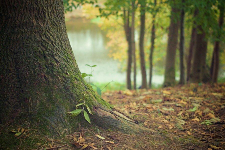 Couillonnade d'automne - Poésie - Johan Creeten